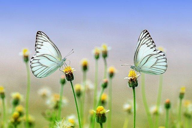 Kam za Motýlími domy? Poradíme vám!