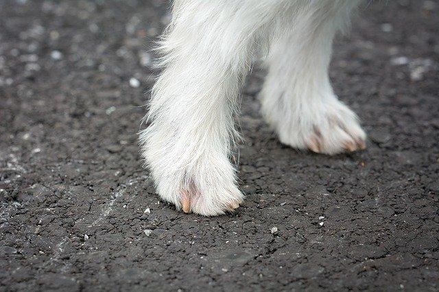 Stříhání drápků u psů: jak, kdy a proč